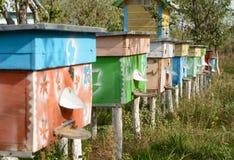 Colmenas de abejas en el colmenar Foto de archivo