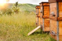 Colmenas de abejas en el colmenar Imagenes de archivo