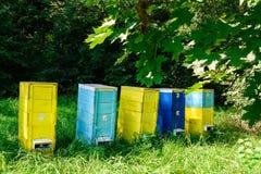 Colmenas de abejas en el colmenar Apicultura Fotografía de archivo