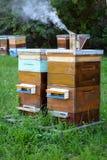 Colmenas de abejas en el colmenar Apicultura Imagenes de archivo