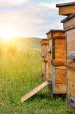 Colmenas de abejas en el colmenar Salida del sol Imagenes de archivo