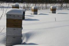 Colmenas de abejas en invierno Imágenes de archivo libres de regalías