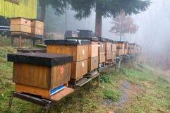 Colmenas de la abeja Imagen de archivo