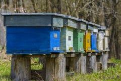 Colmenas de la abeja Fotos de archivo libres de regalías
