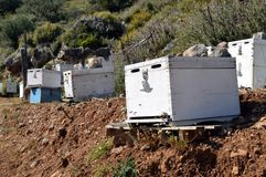 Colmenas de la abeja Fotos de archivo