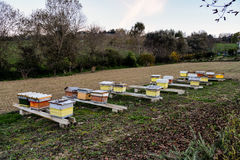 Colmenas de la abeja Imágenes de archivo libres de regalías