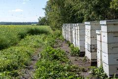 Colmenas de la abeja al borde de un campo de granja Fotos de archivo