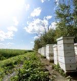 Colmenas de la abeja al borde de un campo de granja Fotos de archivo libres de regalías
