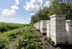 Colmenas de la abeja al borde de un campo de granja Imágenes de archivo libres de regalías