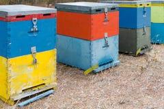 Colmenas de la abeja al lado de un bosque del pino en verano Honey Beehives en el prado Fila de las colmenas coloridas de la abej Imágenes de archivo libres de regalías