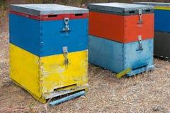 Colmenas de la abeja al lado de un bosque del pino en verano Honey Beehives en el prado Fila de las colmenas coloridas de la abej Imagen de archivo libre de regalías