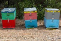 Colmenas de la abeja al lado de un bosque del pino en verano Honey Beehives en el prado Fila de las colmenas coloridas de la abej Imagenes de archivo