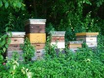 Colmenas de la abeja de la colmena Foto de archivo libre de regalías