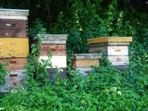 Colmenas de la abeja de la colmena Imagen de archivo