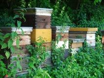 Colmenas de la abeja de la colmena Fotografía de archivo libre de regalías