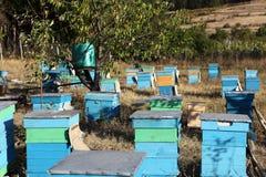 Colmenas de la abeja de la miel Fotos de archivo