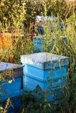 Colmenas de la abeja de la miel Foto de archivo
