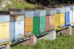 Colmenas de la abeja de la miel Imagen de archivo libre de regalías