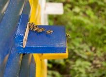 Colmenas de la abeja de la miel Imágenes de archivo libres de regalías