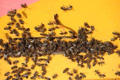 Colmenas de la abeja de la miel Fotografía de archivo libre de regalías