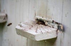 Colmenas de la abeja de la miel Fotos de archivo libres de regalías
