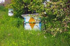 Colmenas de la abeja de la miel Fotografía de archivo