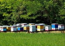Colmenas de la abeja de la miel Foto de archivo libre de regalías