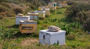 Colmenas de la abeja de la miel en el campo Fotos de archivo
