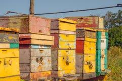 Colmenas de la abeja debajo de un sol brillante del verano Imagen de archivo libre de regalías