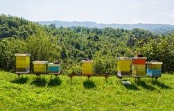 Colmenas de la abeja en el bosque Foto de archivo libre de regalías