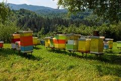 Colmenas de la abeja en el bosque Imagen de archivo