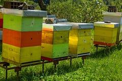 Colmenas de la abeja en el bosque Fotos de archivo libres de regalías