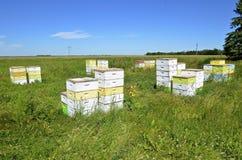 Colmenas de la abeja en el campo Imagen de archivo