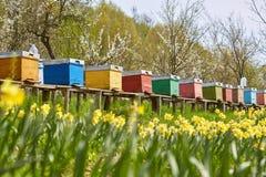 Colmenas de la abeja en el campo y la huerta Fotos de archivo