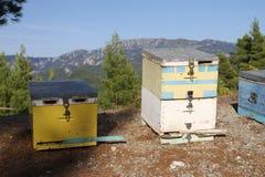 Colmenas de la abeja en Evvoia septentrional en Grecia Fotografía de archivo libre de regalías