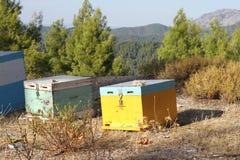 Colmenas de la abeja en Evvoia septentrional en Grecia Foto de archivo libre de regalías