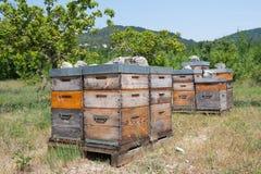 Colmenas de la abeja en huerta Fotografía de archivo