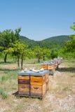 Colmenas de la abeja en huerta Imagen de archivo libre de regalías
