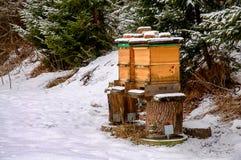 Colmenas de la abeja en invierno Foto de archivo libre de regalías