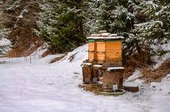 Colmenas de la abeja en invierno Fotografía de archivo