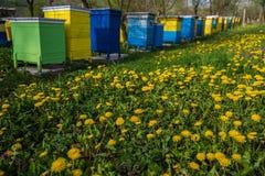 Colmenas de la abeja en jardín de la primavera Fotografía de archivo libre de regalías