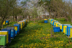 Colmenas de la abeja en jardín de la primavera Foto de archivo libre de regalías