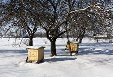 Colmenas de la abeja en jardín nevoso Fotos de archivo