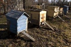 Colmenas de la abeja en primavera Fotografía de archivo