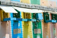 Colmenas de la abeja en un camión Foto de archivo libre de regalías