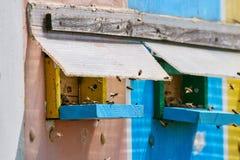 Colmenas de la abeja en un camión Imagen de archivo libre de regalías
