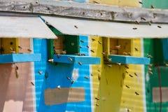 Colmenas de la abeja en un camión Fotografía de archivo