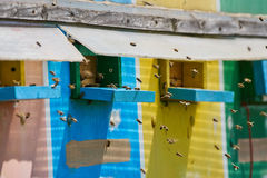 Colmenas de la abeja en un camión Fotos de archivo