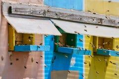 Colmenas de la abeja en un camión Foto de archivo