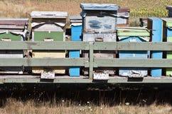 Colmenas de la abeja en un campo Primer Fotos de archivo libres de regalías